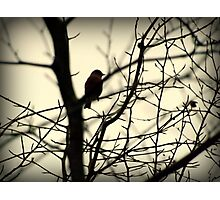 Bird in a Thorny Tree Photographic Print
