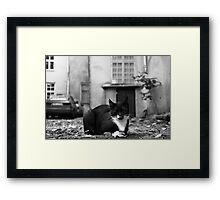 Just cat Framed Print