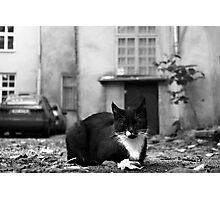 Just cat Photographic Print