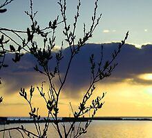 Sea sunset by CerbeR2008