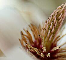Floral Cacti by Lita Medinger