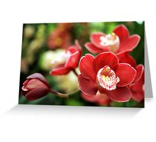 Burgundy Orchid Greeting Card