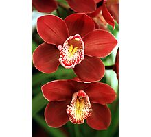 Burgundy Orchids 2 Photographic Print