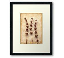 Dried Sage Framed Print
