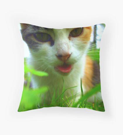 Baaa,baaaa ! (kitty impersonating a sheep) Throw Pillow