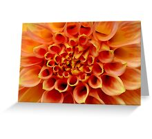 "photoj S.A., Flora, ""Wild Orange"" Greeting Card"