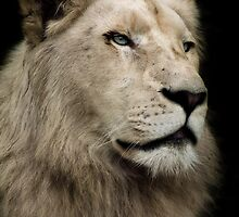 The White Lion by Natalie Manuel