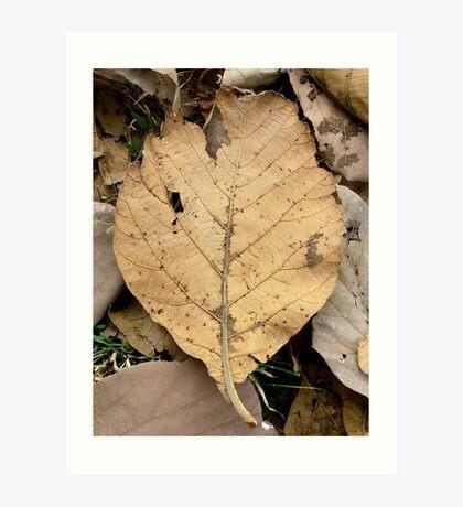 Dry Leave Art Print