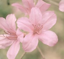 Soft&Springy by leslie wood