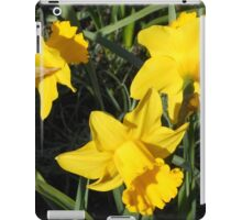 Daffodils Dreaming iPad Case/Skin