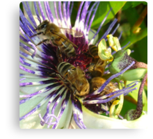 Passion Flower and Honey Bees Collecting Pollen Canvas Print