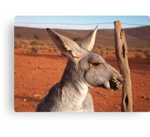 Roo-roo, Mount Ive Station Canvas Print