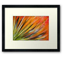 Desert Bloom in Orange Framed Print