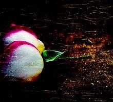 Flower by sparrowdk