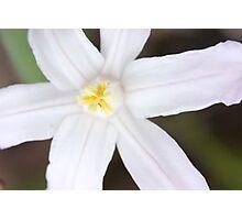 Macro - White Flower Photographic Print