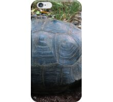 Curious Giant Galapagos Tortoise iPhone Case/Skin