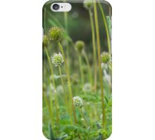 Burs flowering amongst the grass iPhone Case/Skin