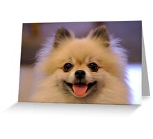 Loud Pomeranian