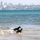 Dogs on Rosebay Beach, Sydney by Darren Stein