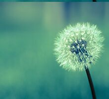 Make a wish by Heidelberger Photography