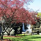 The Great Falls in the Spring, April 2015 - view 3 by Jane Neill-Hancock