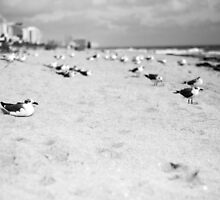 Basking Seagulls by link2sue