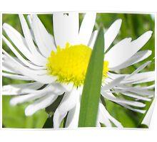 little daisy little leaf Poster