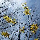 Spring Fling by RVogler