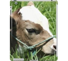 Head of a Brown and White Calf iPad Case/Skin
