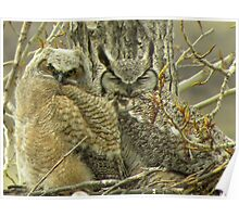 Mom Owl and Owlet up CLose  Poster