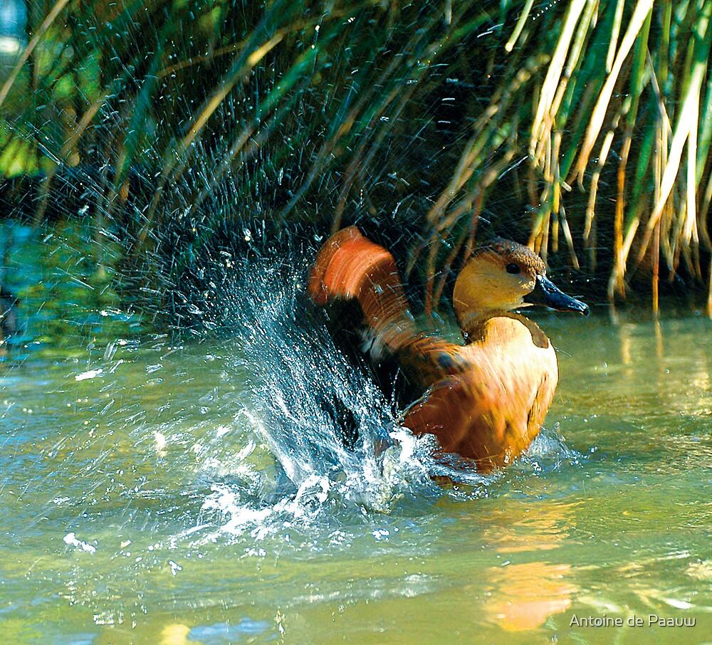 Making a splash by Antoine de Paauw