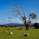 Wesley Vale Views by Peter Daalder