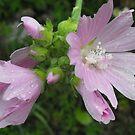 Wonderful Wildflower by Tracy Wazny