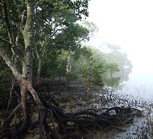 Misty World by karenphotos