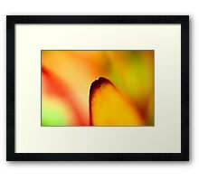 I only need one petal, because I know she loves me... Framed Print