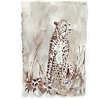 The Cheetah (Acinonyx jubatus)  Photographic Print