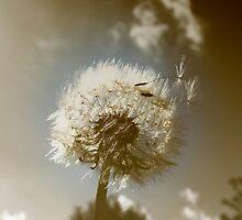 Parachute Ball by Hilary Walker