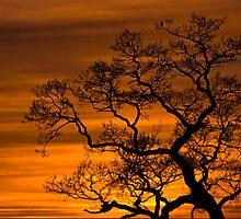 Burning Tree by CJTill