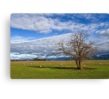 Rural Views in the Northern Midlands Canvas Print