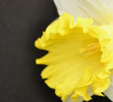 Soft Yellow Daffodil Sticker