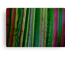 Coloured Maize Canvas Print