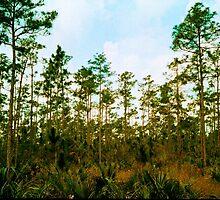 Pine Rockland Ecosystem by njordphoto