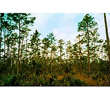 Pine Rockland Ecosystem Photographic Print