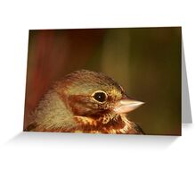 Fox Sparrow in the Spring Greeting Card
