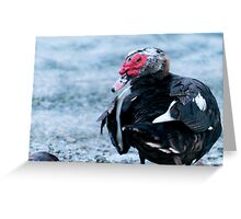 That Tail Feather Greeting Card