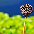 Lilly Pod by Bhumi Shah