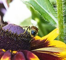 Bee at Work by Marylou Badeaux