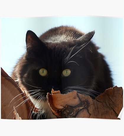 Black Cat on a Wood Pile Poster