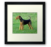 Special Airedale Terrier Framed Print