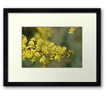 Blooming in yellow Framed Print